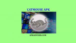Cat Mouse APK download